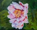 peony - oil on canvas 24x30
