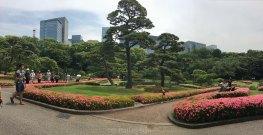 palace ground